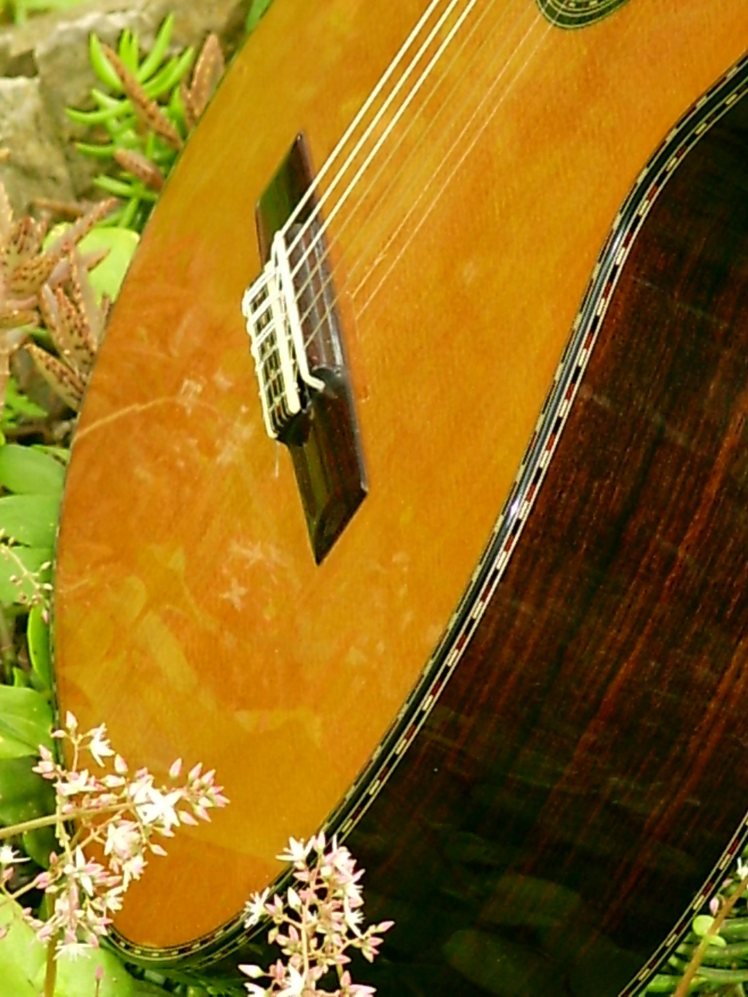 Cedar and rosewood guitar in nature